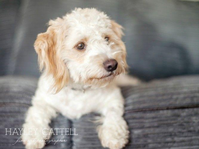 Dog Pet Portraits Photography Hayley