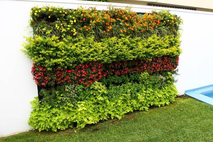 Jard n vertical en tu casa te decimos como tener uno sin for Jardines verticales panama