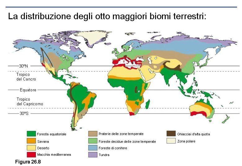 Cartina Mondo Tropici.Mrskachmar 05 Maggio 2014 1 Bioma Mappe Concettuali Mappa