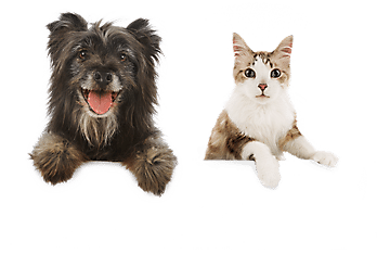 Georgine Saves Blog Archive Good Deal Petsmart Up To 40 Off Happy Animals Pets Your Dog