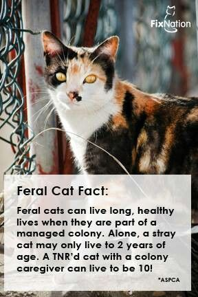 Feral Cats Feral Cat Shelter Cat Facts Feral Cats