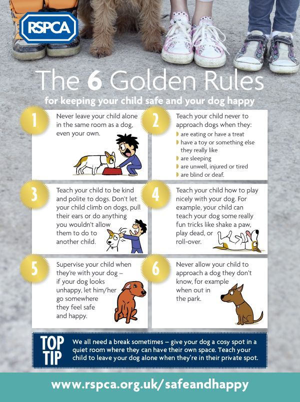 Keeping Children Safe And Dogs Happy Rspca Kids Safe Dogs And Kids Animals For Kids