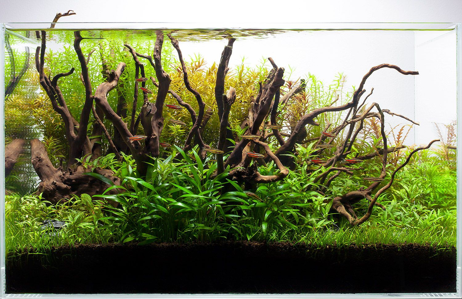 Freshwater aquarium fish houston - Aquarium Design Group Is The Premiere Source For Custom Aquarium Design Installation And Service Maintenance In Houston Texas And Beyond