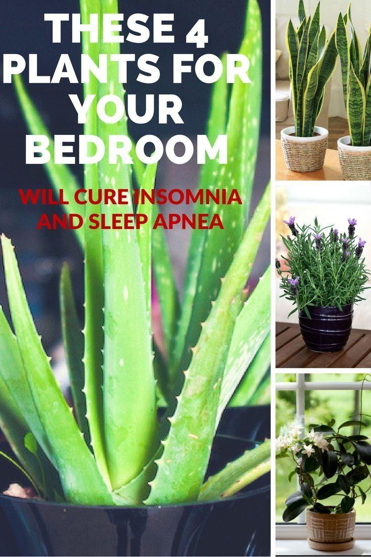 Odanıza koyacağınız 5 bitki ile uykusuzluğa son