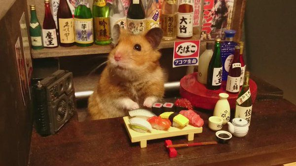 Whimsical Day In The Life Of This Hamster Bartender And Chef - Hamster bartenders cutest thing youve ever seen