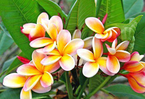 Tropical Plants Louie S Nursery And Garden Center Riverside Ca
