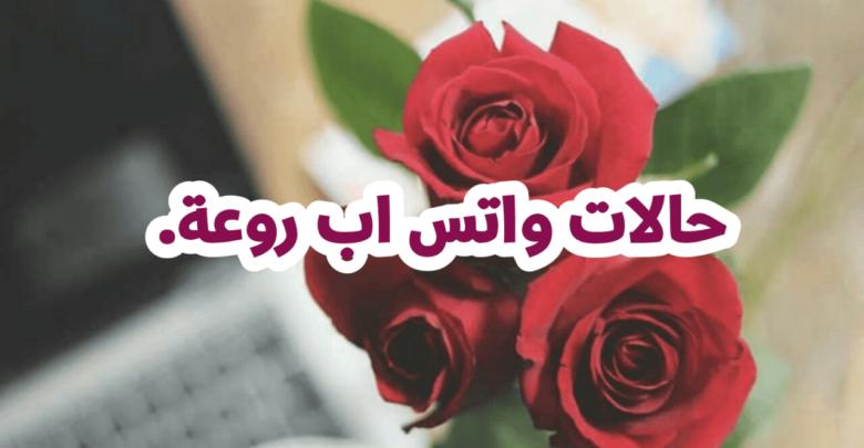 10 حالات واتس اب رائعة لم تقرأ مثلها من قبل Plants Flowers Rose