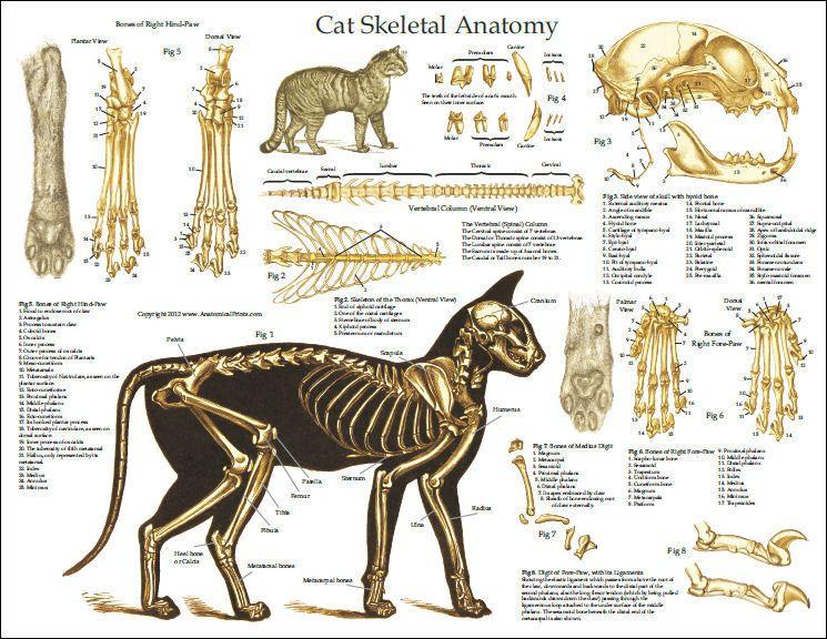 fail cat skeleton doodle - photo #20