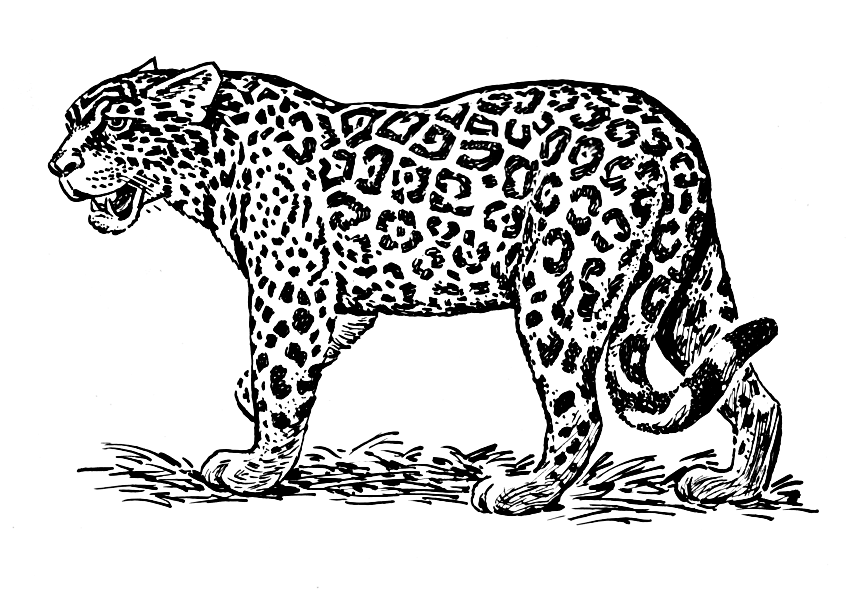 jaguar animal line drawing