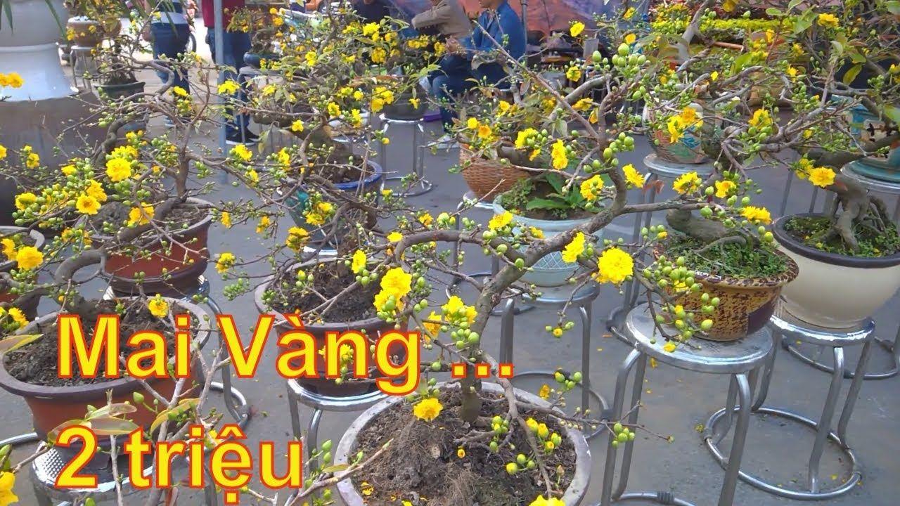 Ghim Tren Dao Tet Bonsai
