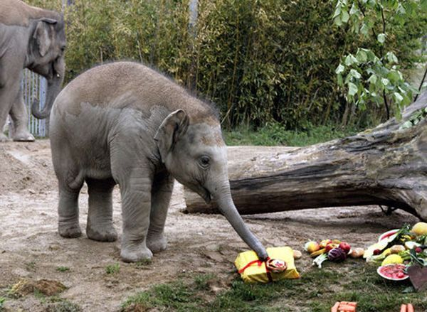 A Birthday Celebration Elephant Love Elephant Baby Elephant