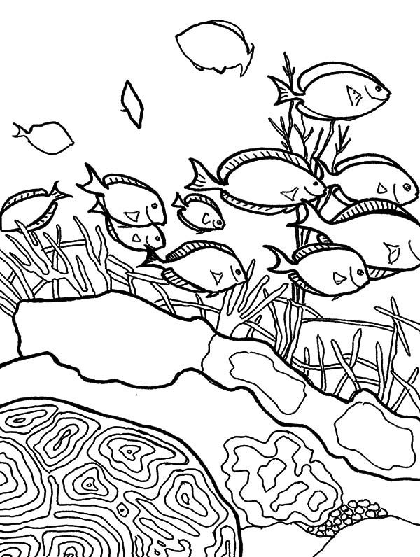 Coral Reef Fish, : School of Coral Reef Fish Coloring Pages | Sea ...