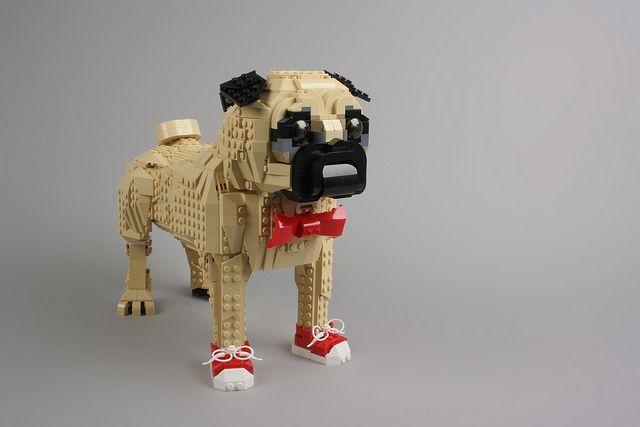 Cool Puggie Pugs Carlin Chien