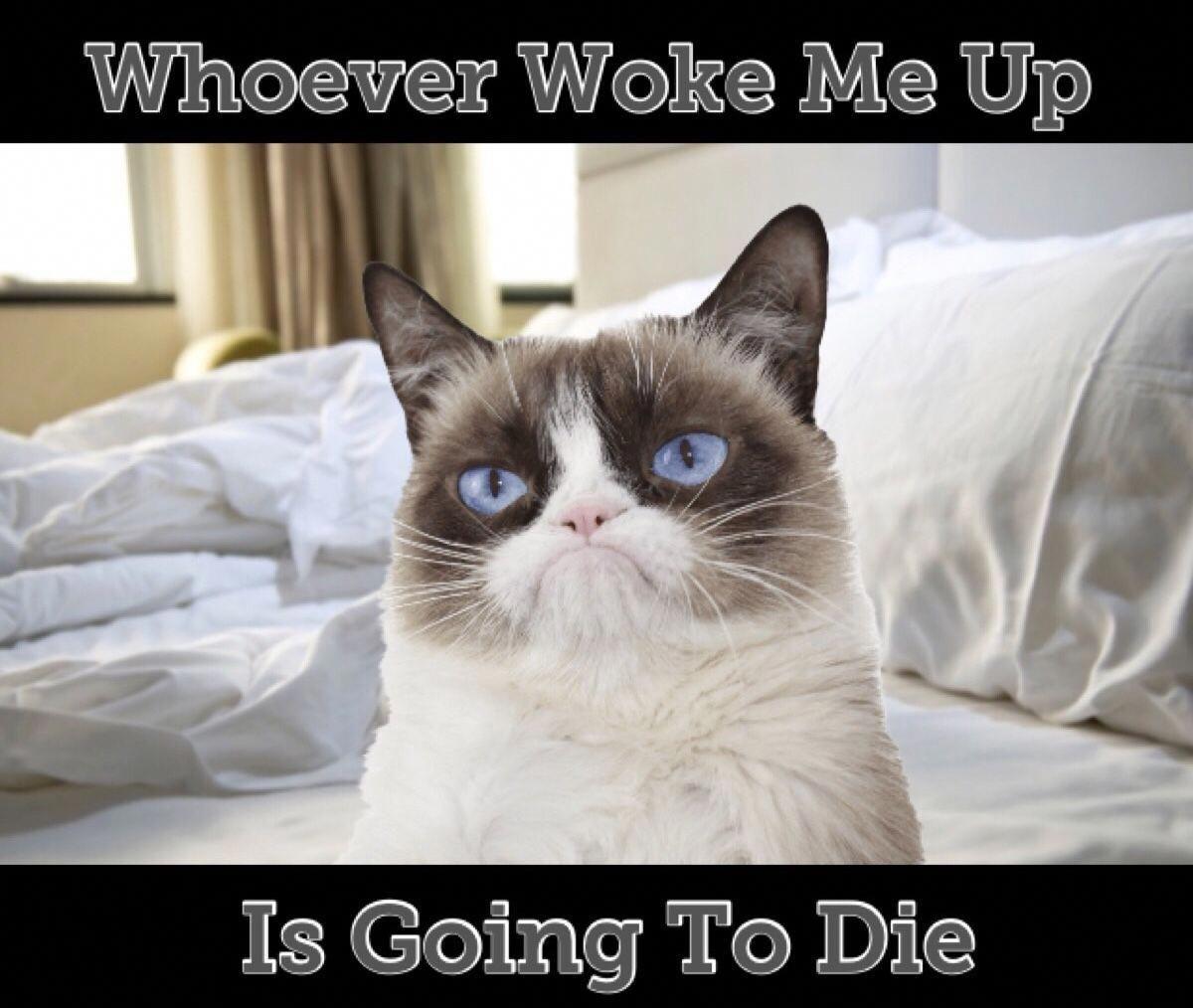 Catskills #CatsLifeSpan   Grumpy cat, Grumpy cat quotes ...