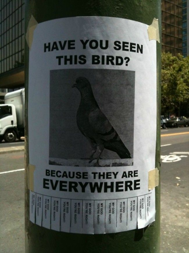 These Funny Signs Will Brighten Your Day Humor Pinterest - lost pet flyer maker