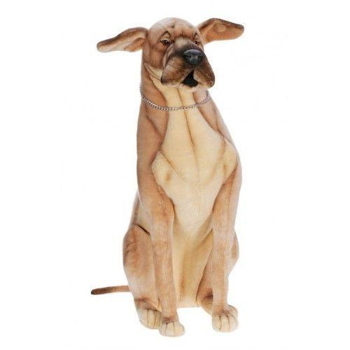 Hamlet Great Dane Great Dane Great Dane Dogs Great Dane Puppy