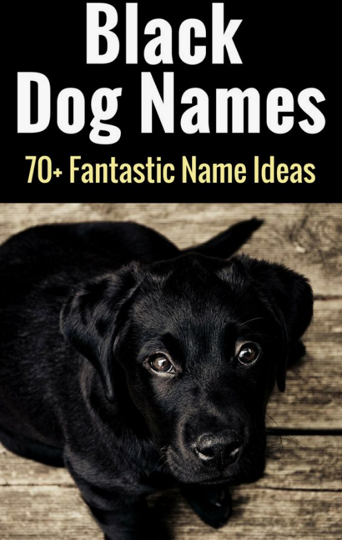 Black Dog Names The Ultimate List 99 Awesome Names Black Dog Names Dog Names Unique Boy Dog Names