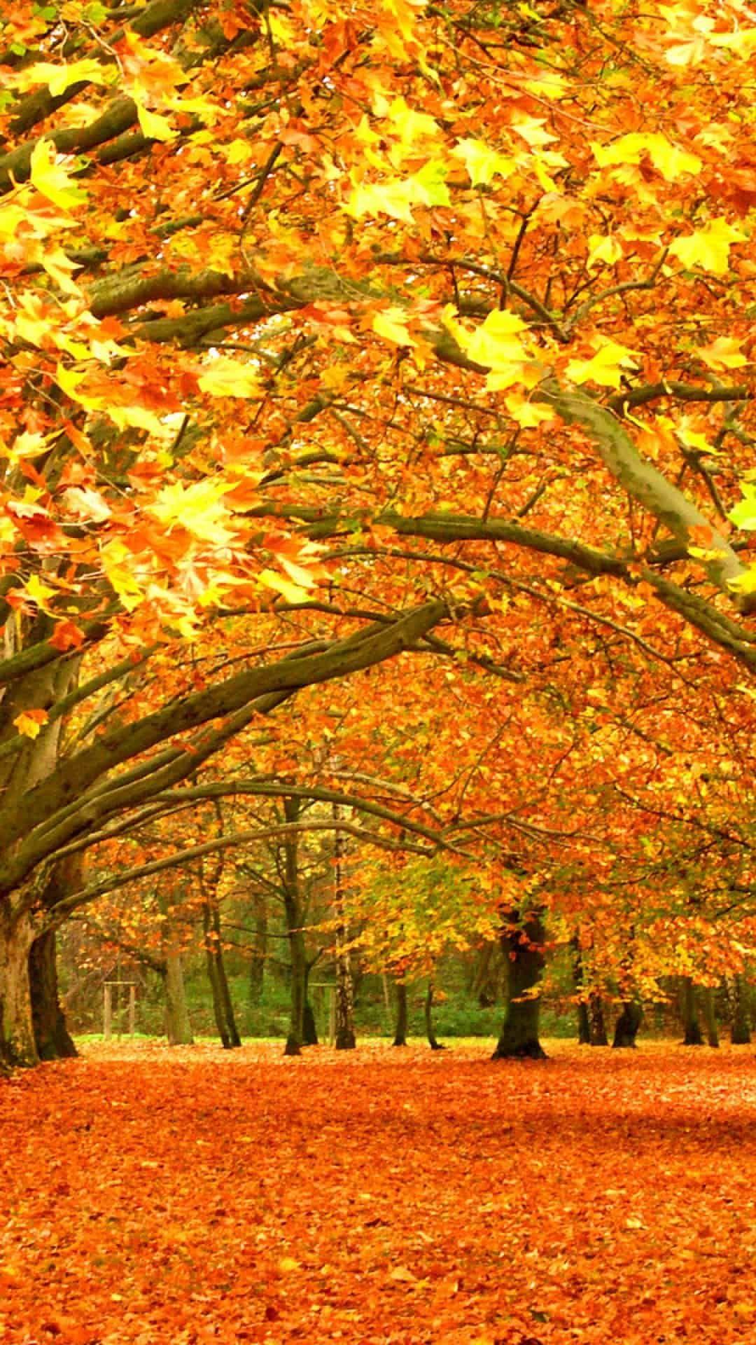 Http Mobw Org 22187 Anime Autumn Mobile Wallpaper Html Anime Autumn Mobile Wallpaper Osennij Pejzazh Pejzazhi Osennie Kartinki
