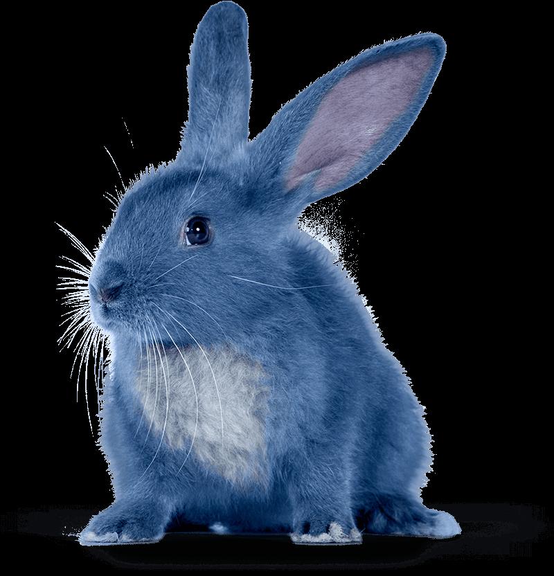 Best 25+ Blue Bunny Ice Cream Ideas On Pinterest