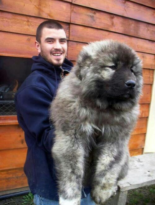 Pictures Of The Cutest Big Dogs