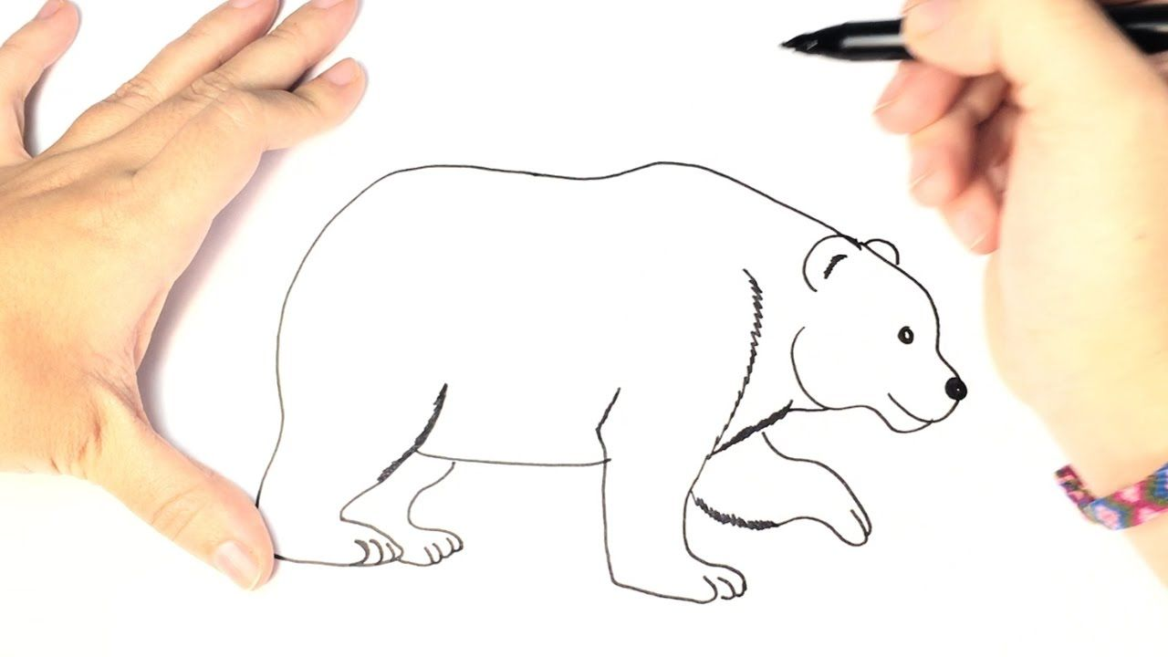 How To Draw A Polar Bear For Kids Youtube Films Om Te