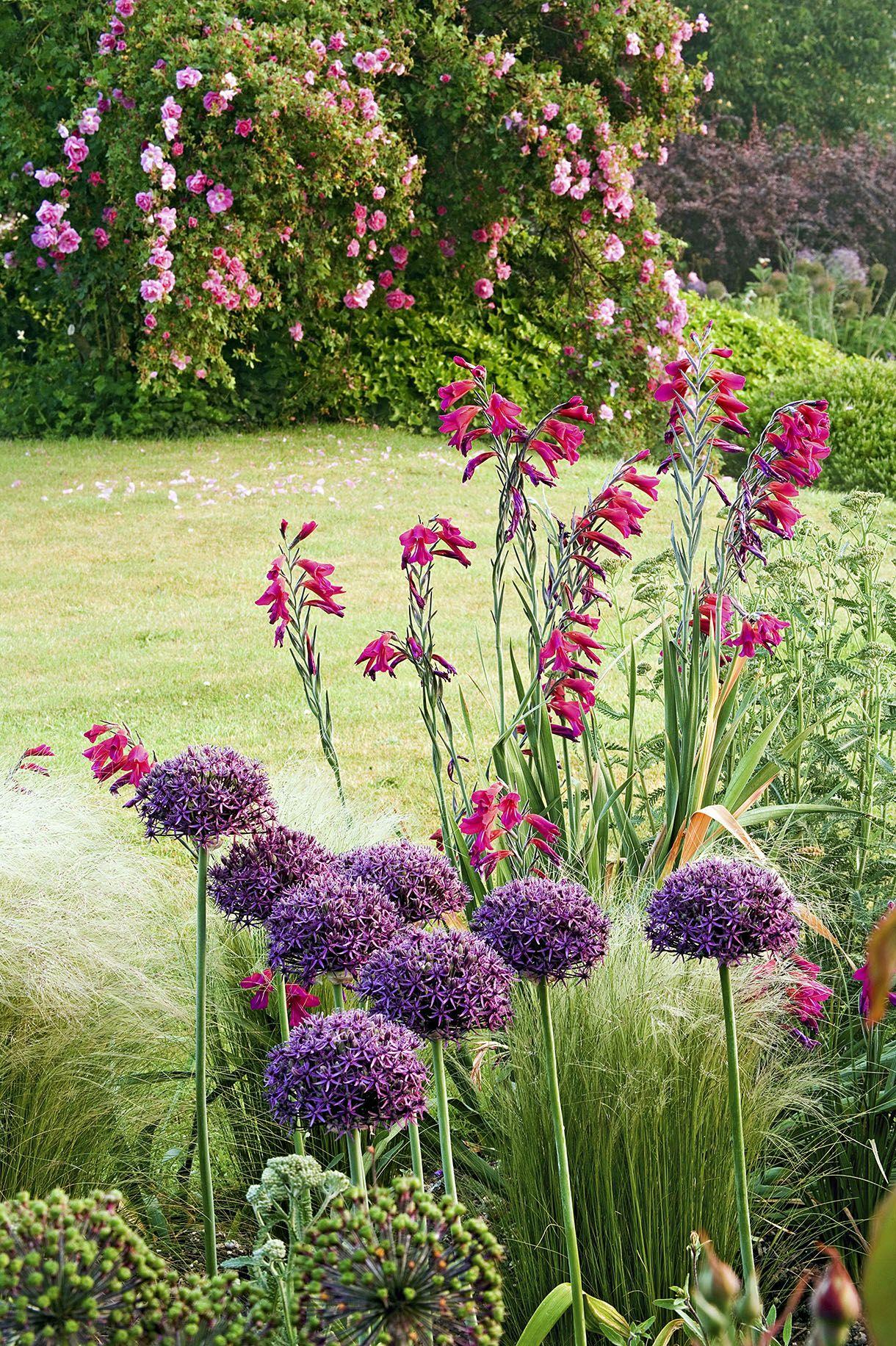 Les Plus Belles Graminées associer bulbes et graminées en massif | jardins champêtres
