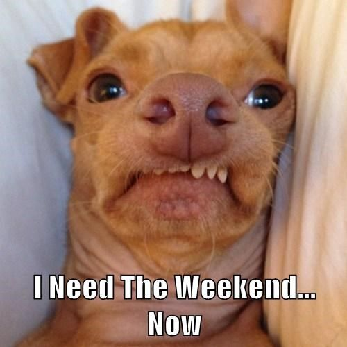 Best 25 friday dog ideas on pinterest it 39 s friday pics friday in love and us coffee - Best dogs for small spaces pict ...