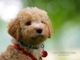 Anett Seidensticker Photographie Podgi Beppa Hunde Fotos Hunde Hundefotografie