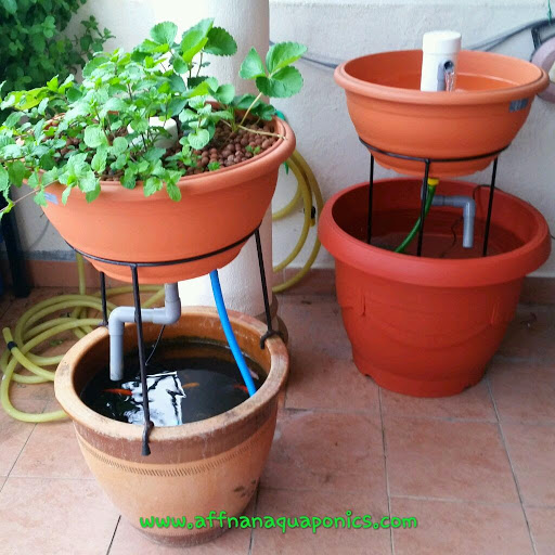 13 DIY Aquaponics Systems to Suit Any Budget is part of Backyard aquaponics, Aquaponics diy, Aquaponics, Aquaponics system, Aquaponic gardening, Aquaponics fish - Did you know it is possible to have your own aquaponics system no matter what space you have available  Read here to see how to make it a reality!