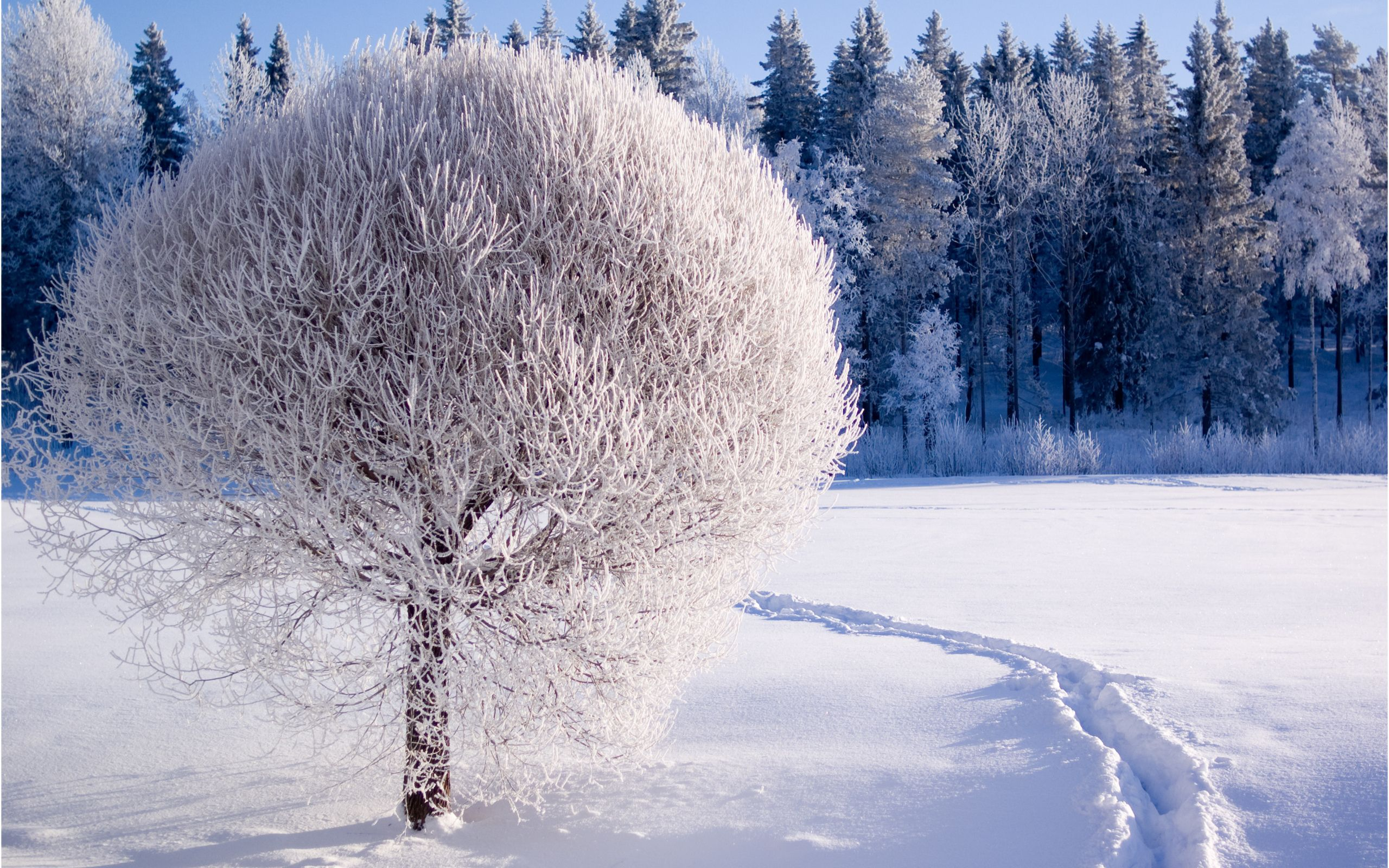 Winter Wallpapers Winter Wallpaper Hd Nature Wallpapers Winter Background
