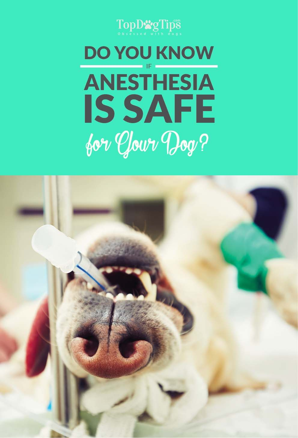 The Truth Is Anesthesia Safe For Dogs Cheap Pet Insurance Dog