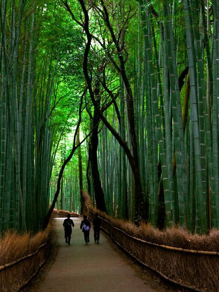 Bamboo Forest, Arashiyama (嵐山), Japan    Soaring bamboo stalks dwarf visitors to Arashiyama Park in western Kyoto. Known for its vertiginous growth, bamboo has numerous uses in Japan, particularly in Kyoto, where it is made into baskets, flutes, pipes, benches, dolls, garden fences, and artifacts for tea ceremonies.