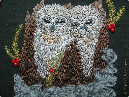 seed owls