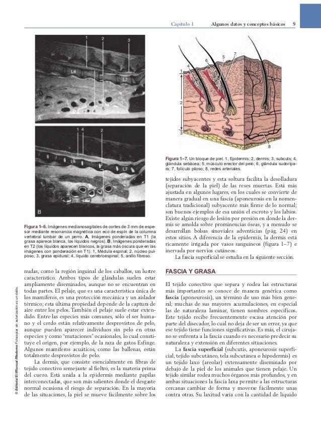 Contemporáneo Dibujo Para Colorear De Anatomía Veterinaria De ...