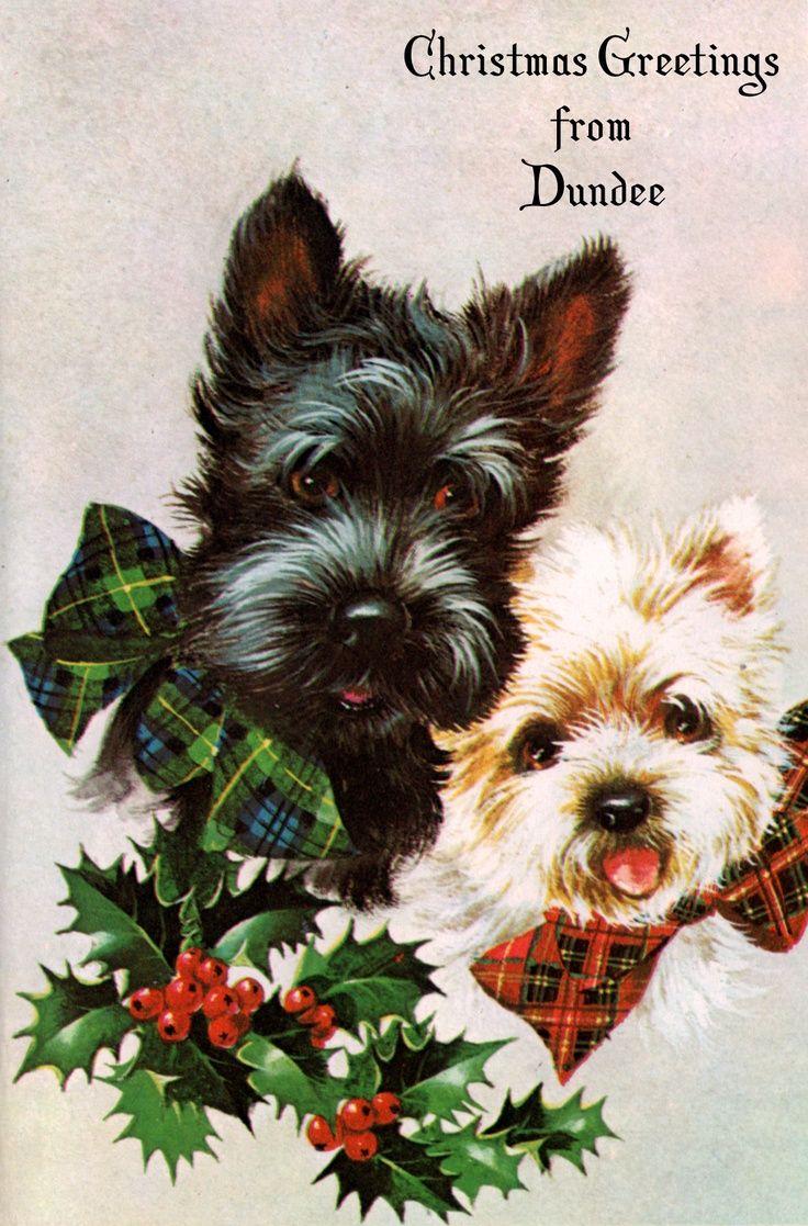 vintage christmas card postcard from scotland adorable scotties scottishterrier scottydog. Black Bedroom Furniture Sets. Home Design Ideas
