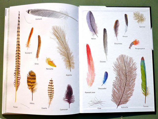 Isabelle Simler - endpapers by laura@popdesign, via Flickr