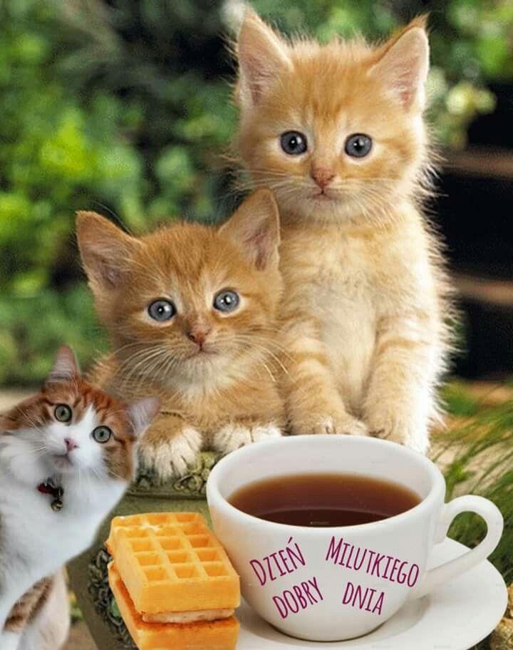 с добрым утром красивые картинки котята красного моря фото