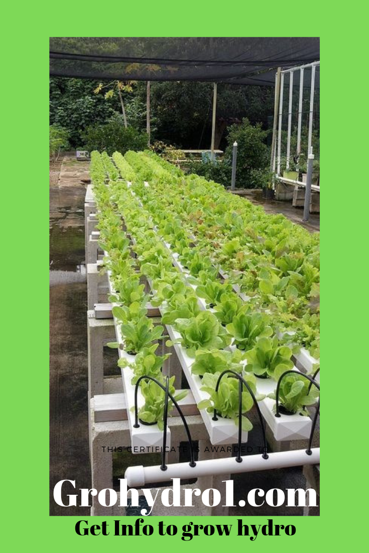 This Is 1 Version Of Hydroponic Growing Check The Site For Various Set Ups Hydroponics Is Great For Diy Gardeners Check The Blogs Hydroponic Growing