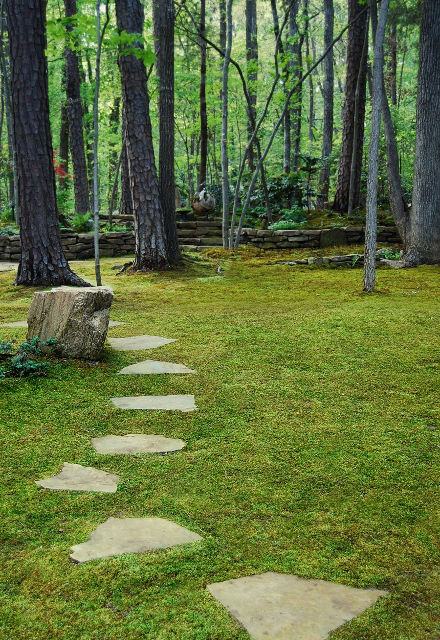 Moss Lawns How To Grow Moss Moss And Stone Gardens Blog