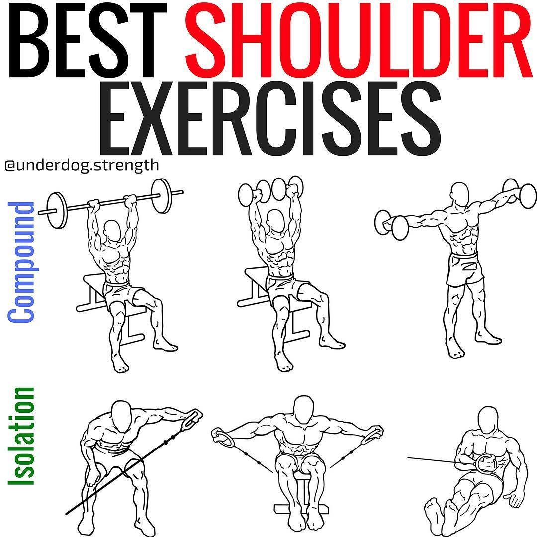 Want To Build Strong Shoulders The Shoulder Muscles
