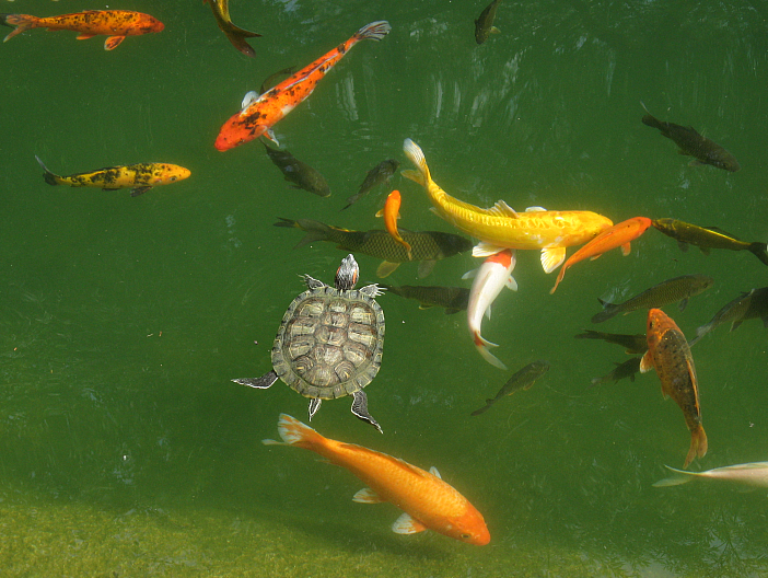 Salmonella And Pet African Dwarf Clawed Frogs Unraveling