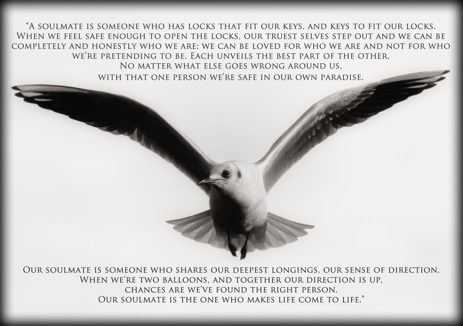 Seagull Inspirational Wallpaper digital images by ccdeleo