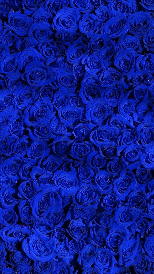 Pin by Lauren Garza on Flowers & plants Blue flower