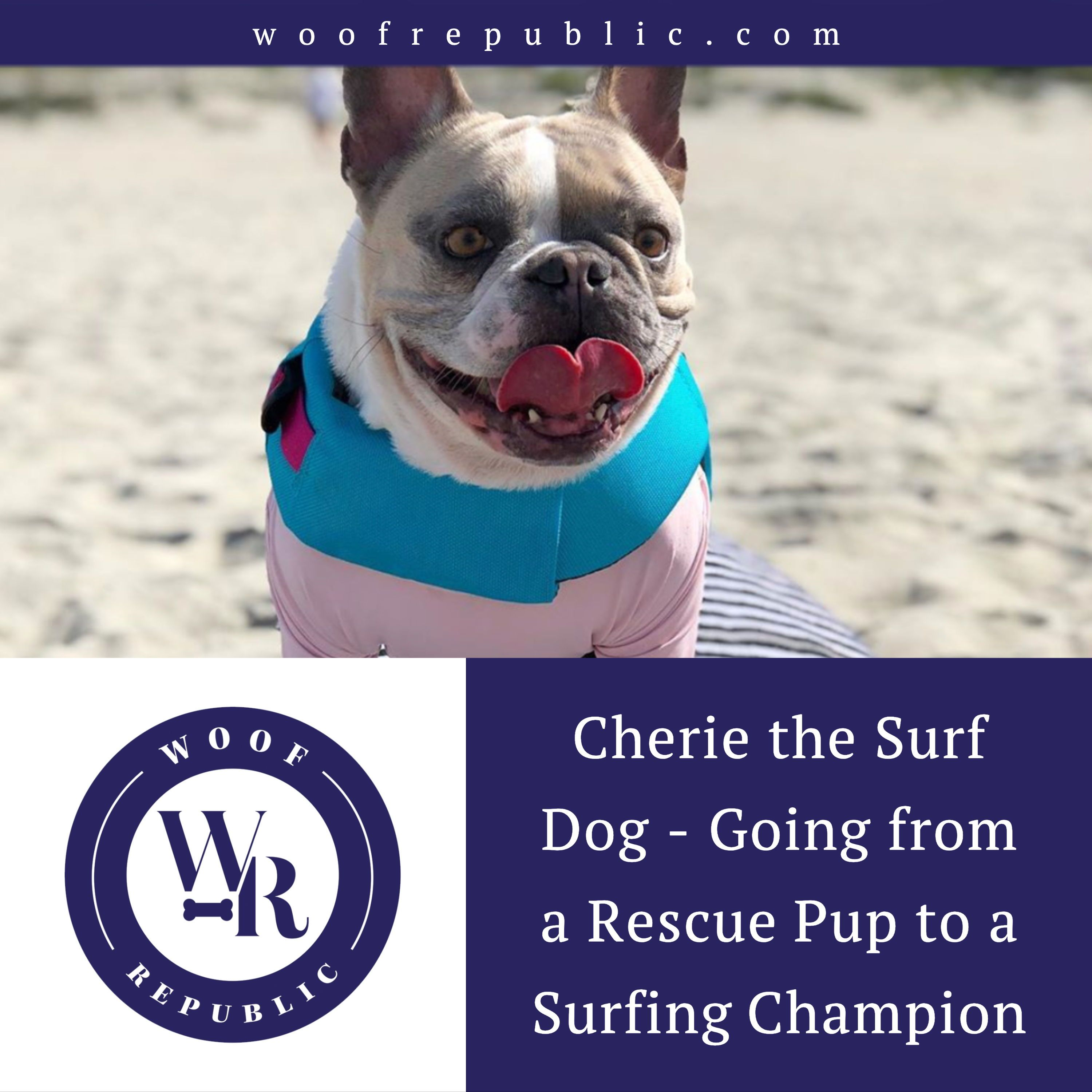 One Of The Most Popular Surfing Champion Pups Is A Rescue Pup Who