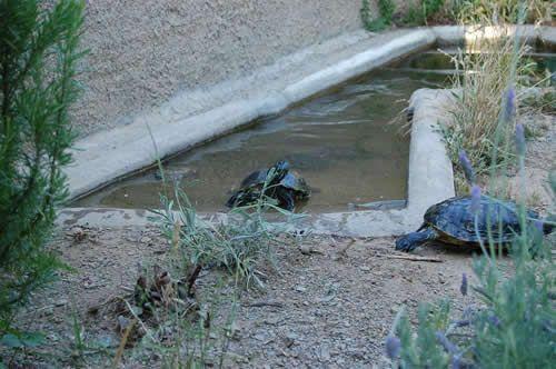 Como hacer estanques para tortugas de agua buscar con for Como hacer un pequeno estanque en el jardin