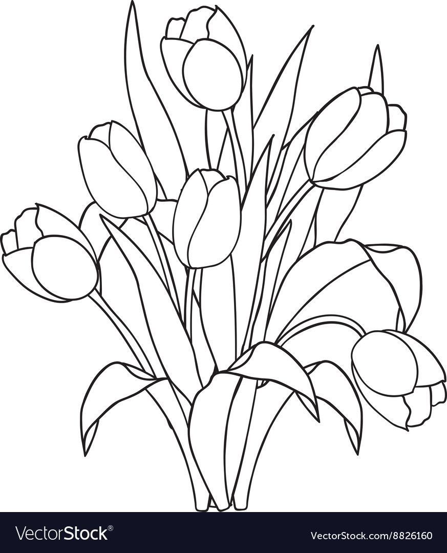 Tulips , flowers, ornamental black and white coloring ...