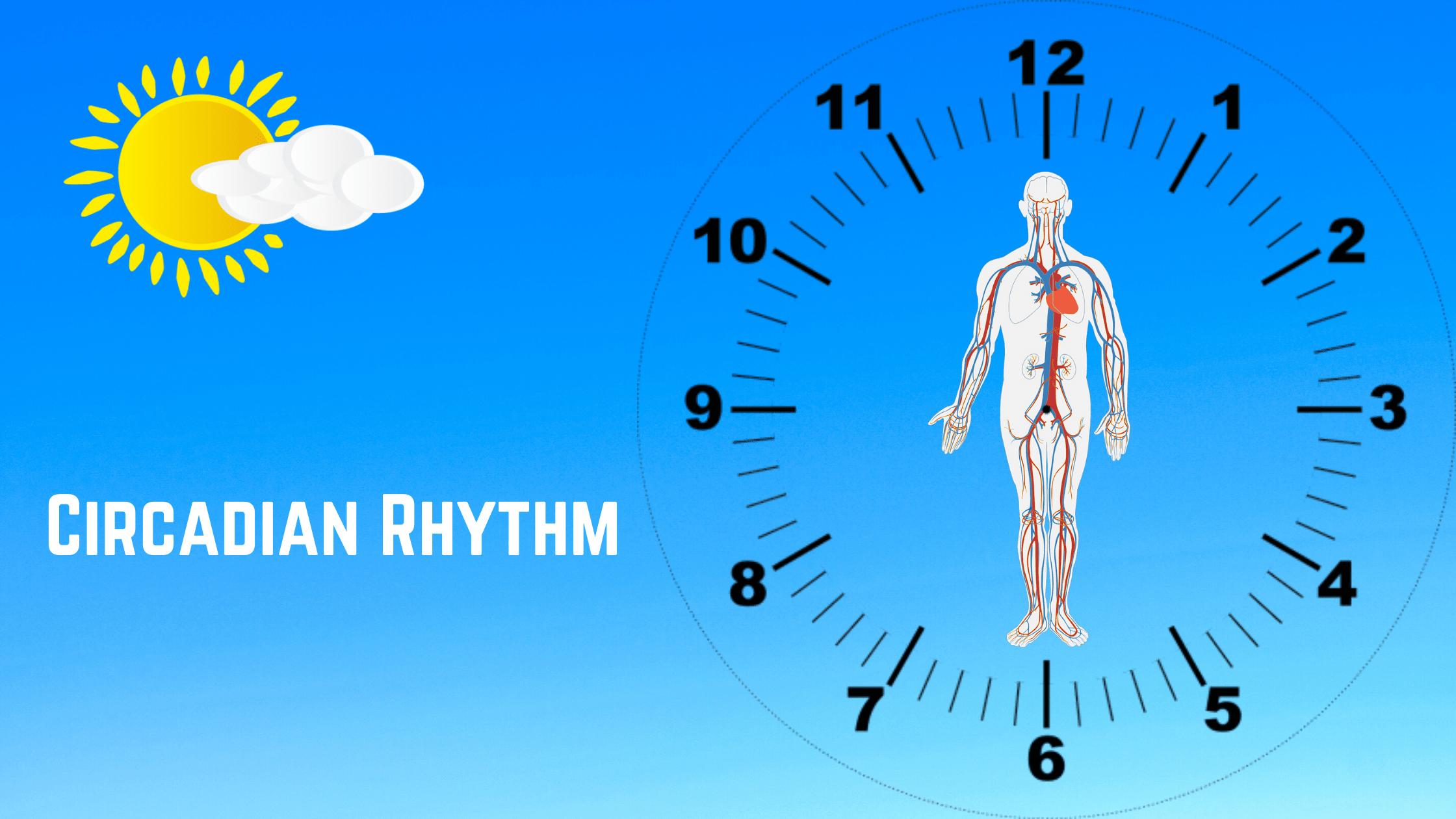 Circadian Rhythm What You Should Know
