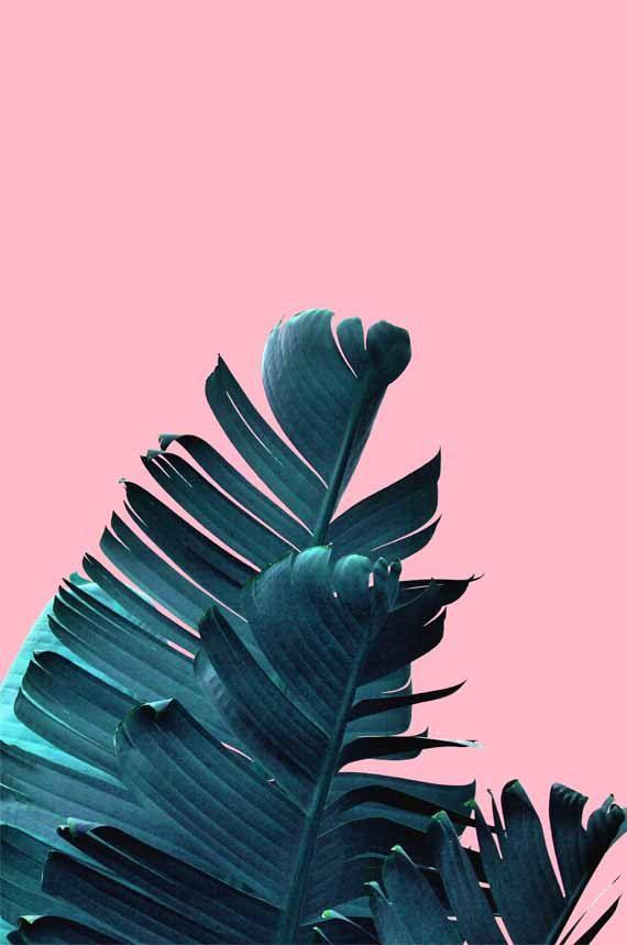 banana leaf print palm leaf poster botanical wall art blue pink