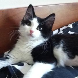 Chelsea Kirkland Adli Kullanicinin Acr S Adopted Cats Panosundaki Pin Kedi