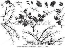 acacia silhouette - Google Search